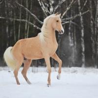 Конный фотограф Александра Бабичева - фото QzbBx2F3rl8-200x200, главная Фото , конный журнал EquiLIfe