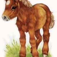 Художница Робин Джеймс (Robin James) - фото Shetland-Pony72dpism-200x200, главная Фото , конный журнал EquiLIfe