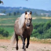 Конный фотограф Александра Бабичева - фото a1djFsGnRao-200x200, главная Фото , конный журнал EquiLIfe
