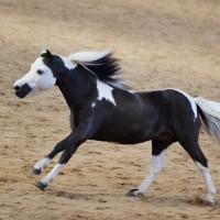Конный фотограф Александра Бабичева - фото eDRvanxGB08-200x200, главная Фото , конный журнал EquiLIfe