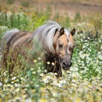 Конный фотограф Александра Бабичева - фото eZQGvHehs3E-200x200, главная Фото , конный журнал EquiLIfe