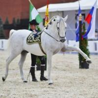 Конный фотограф Александра Бабичева - фото gD7a2YlWlA-200x200, главная Фото , конный журнал EquiLIfe