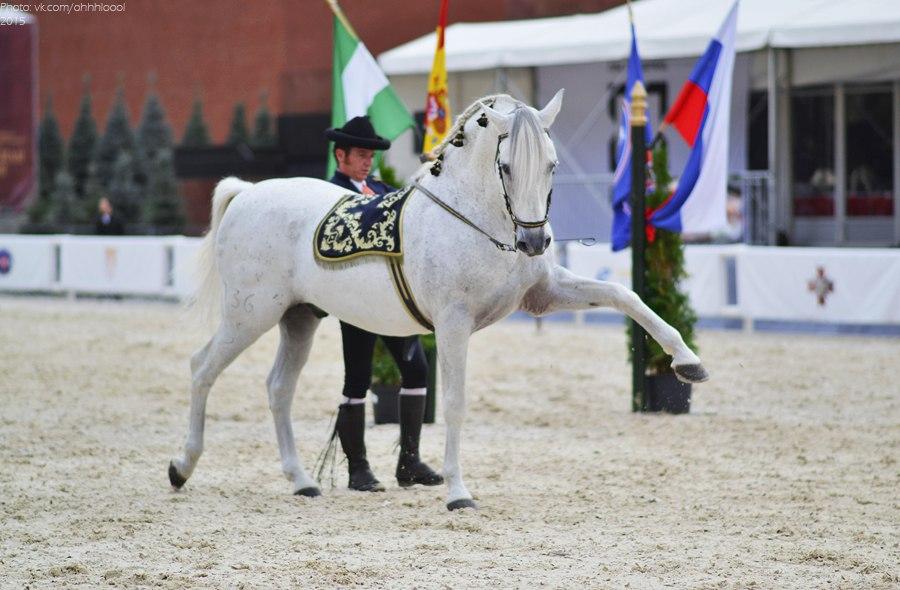 Конный фотограф Александра Бабичева - фото gD7a2YlWlA, главная Фото , конный журнал EquiLIfe