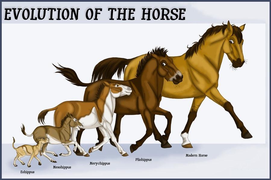 Эволюция лошадей - фото horse_evolution_by_pookyns_5-d4utpxm, главная Поведение лошади , конный журнал EquiLIfe