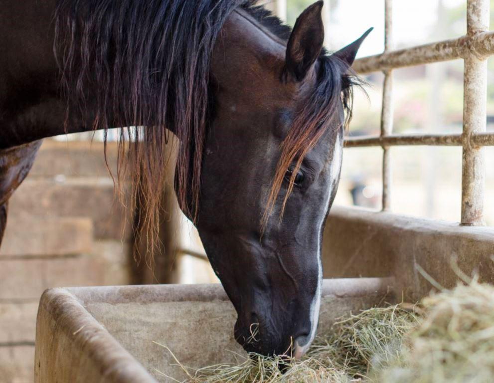 Кормление лошади: основные принципы практического составления рационов - фото how-to-feed-a-post-laminitic-horse-5319bb6a4086a, главная Рацион , конный журнал EquiLIfe