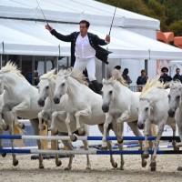 Конный фотограф Александра Бабичева - фото n6-p01IThAs-200x200, главная Фото , конный журнал EquiLIfe
