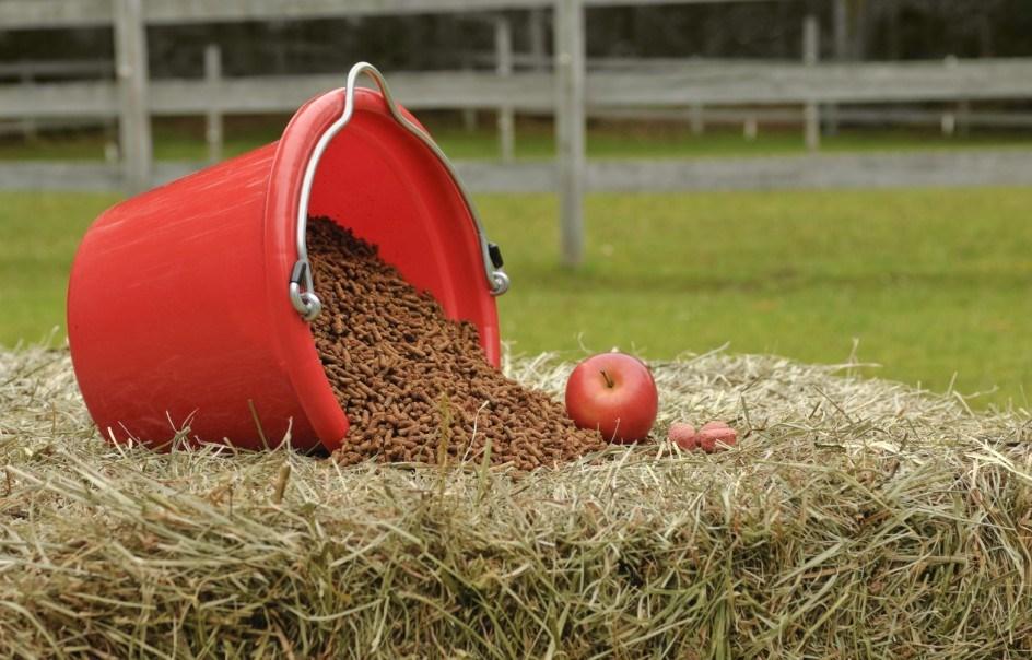 Кормление лошади: основные принципы практического составления рационов - фото sugary-grain-n-treats-1024x6791, главная Рацион , конный журнал EquiLIfe