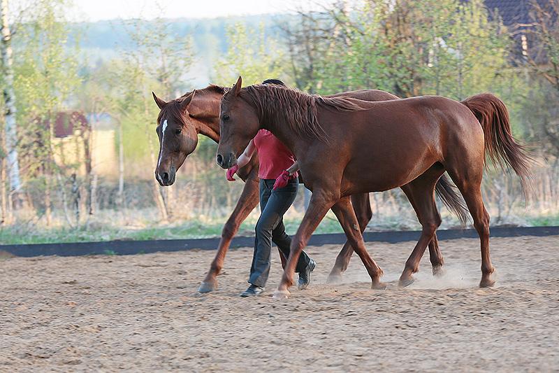 Интервью. Марина Красильщикова: «И это все равно было не то» Ч.1 - фото -двумя-лошадьми, главная Интервью , конный журнал EquiLIfe