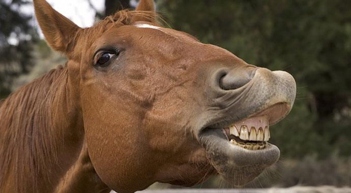 Здоровые зубы – здоровый желудок у лошадей - фото -под-названием, главная Здоровье лошади Рацион , конный журнал EquiLIfe
