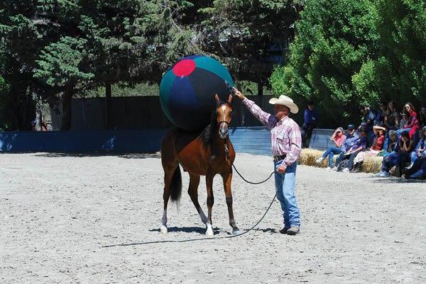 Томми Гарленд, шоу-тренер с мячом  - фото CbudOLI8Vgc, главная Тренинг , конный журнал EquiLIfe