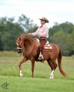 Томми Гарленд, шоу-тренер с мячом  - фото ChestWP-240x300, главная Тренинг , конный журнал EquiLIfe