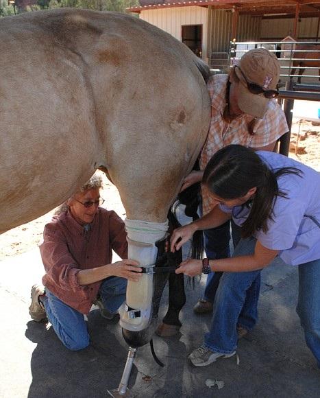 Протез для лошади. Уникальный случай. - фото 3-20, главная Здоровье лошади Конные истории , конный журнал EquiLIfe