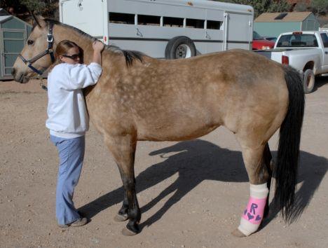 Протез для лошади. Уникальный случай. - фото 4-5, главная Здоровье лошади Конные истории , конный журнал EquiLIfe