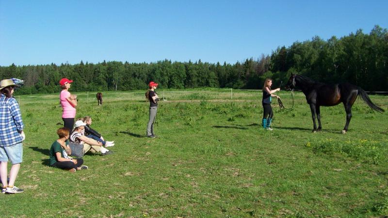 Интервью. Содержание жеребцов. Практический опыт. - фото EMprgW2-qOM, главная Интервью , конный журнал EquiLIfe