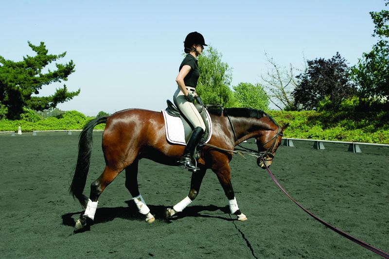 Учебная рысь. Часть 2. Всадник. - фото PRHP-060900-SITTIN-16, главная Тренинг , конный журнал EquiLIfe