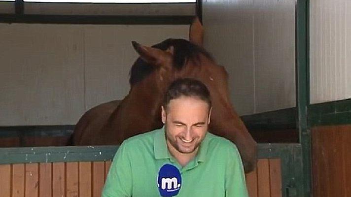 Лошадь сорвала греческому журналисту стенд-ап. - фото f_79784833514669587261, главная Разное , конный журнал EquiLIfe