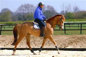 Учебная рысь. Часть 2. Всадник. - фото th, главная Тренинг , конный журнал EquiLIfe