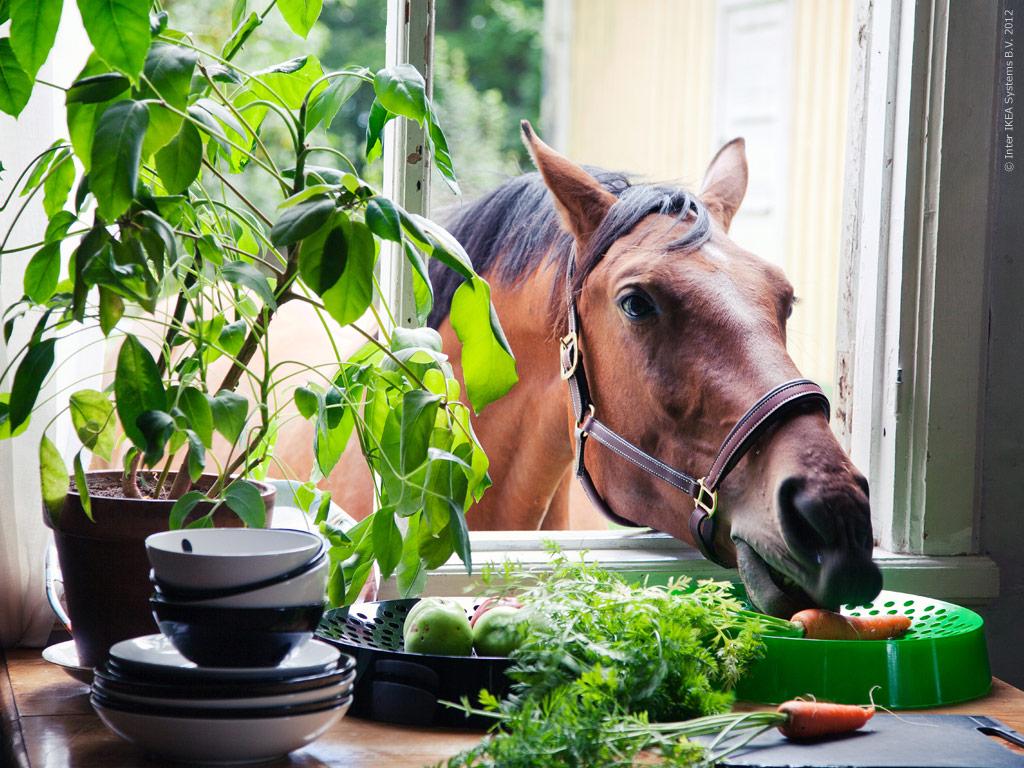 Основные правила кормления лошадей - фото unexpected-guest-but-welcome, главная Рацион , конный журнал EquiLIfe
