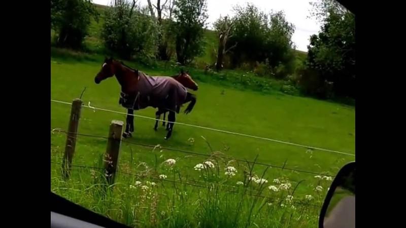 Конь-металлист - фото 3, главная Новости Разное , конный журнал EquiLIfe