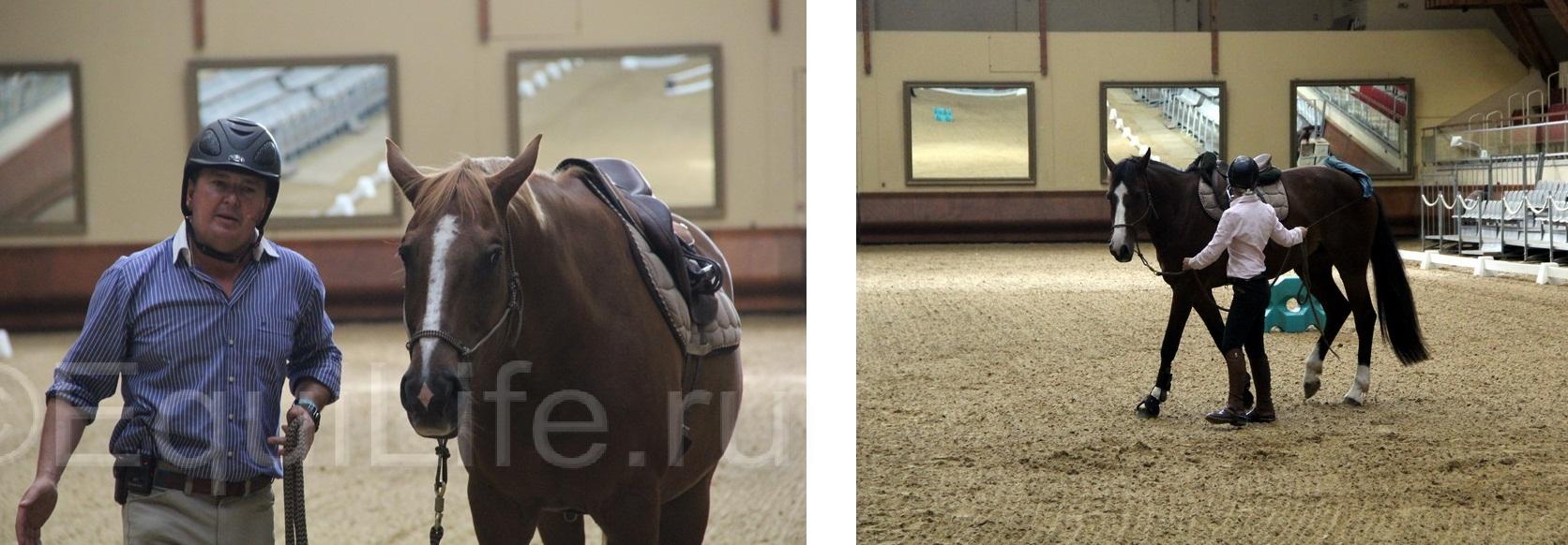 Отчет о посещении 12th International Society Equitation Science 2016 - фото IMG_0783-1_wm, главная События Тренинг , конный журнал EquiLIfe