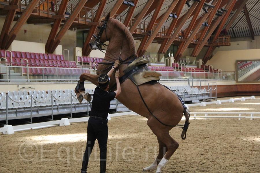 Отчет о посещении 12th International Society Equitation Science 2016 - фото IMG_0814_wm, главная События Тренинг , конный журнал EquiLIfe