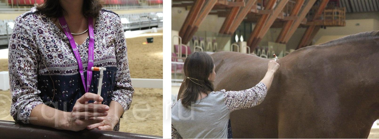 Отчет о посещении 12th International Society Equitation Science 2016 - фото IMG_0873-1_wm, главная События Тренинг , конный журнал EquiLIfe