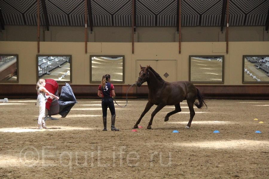 Отчет о посещении 12th International Society Equitation Science 2016 - фото IMG_0889_wm, главная События Тренинг , конный журнал EquiLIfe
