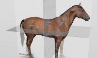 veterinary-equine-anatomic-planes