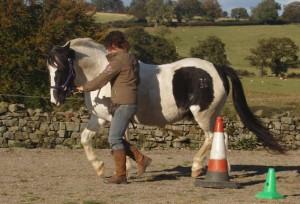 О Карен Прайор, лошадях и кликер-методе - фото -тренинг-300x204, главная Книги о лошадях Разное Тренинг , конный журнал EquiLIfe