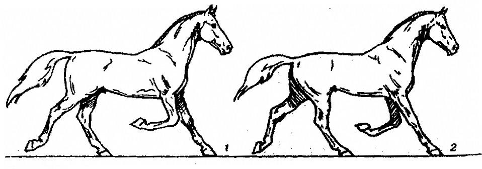 Откуда взялась иноходь - фото 415, главная Конные истории , конный журнал EquiLIfe