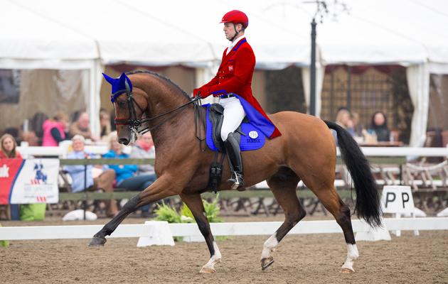 Проблема популяризации выездки - фото horseandhound_co_uk, главная Разное События , конный журнал EquiLIfe