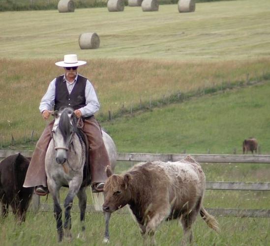 Берни Замбайл: о тесте лошади на кордео - фото 1899977_422640551199373_162400933_n, главная Разное Тренинг , конный журнал EquiLIfe