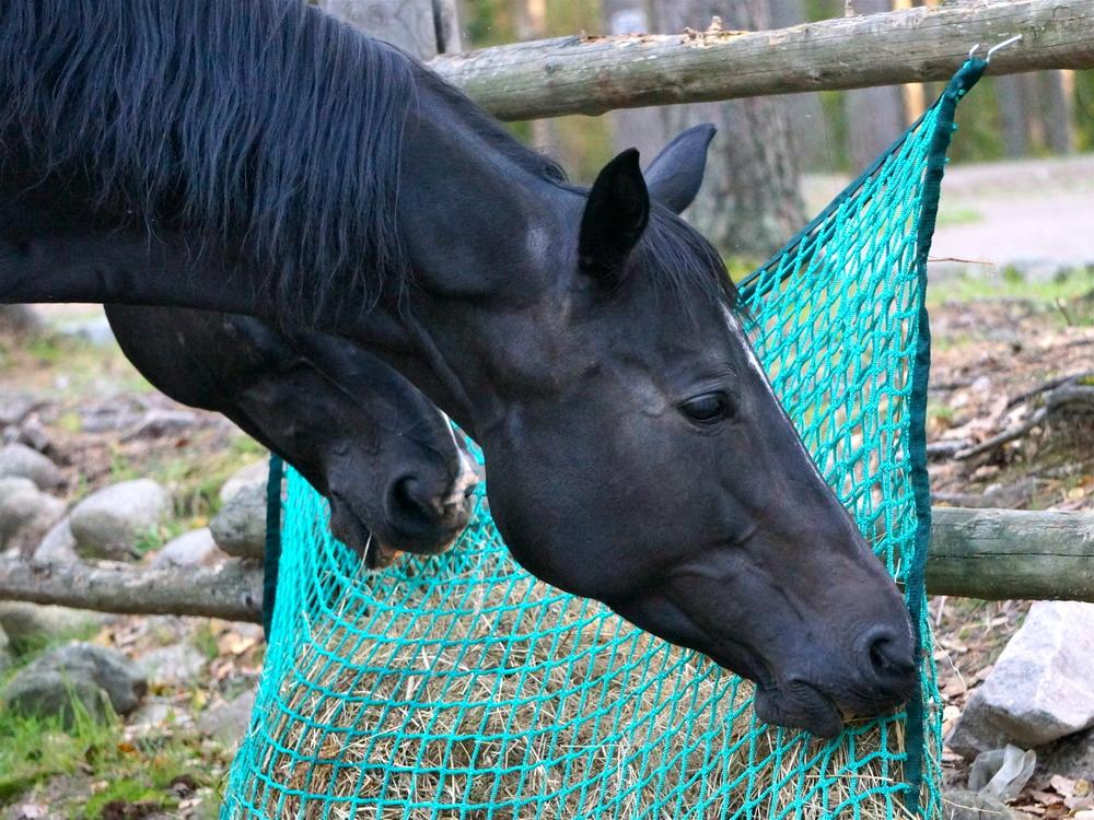 Медленные кормушки. Как обеспечить лошадь постоянным доступом к сену  - фото DSC00895, главная Содержание лошади , конный журнал EquiLIfe