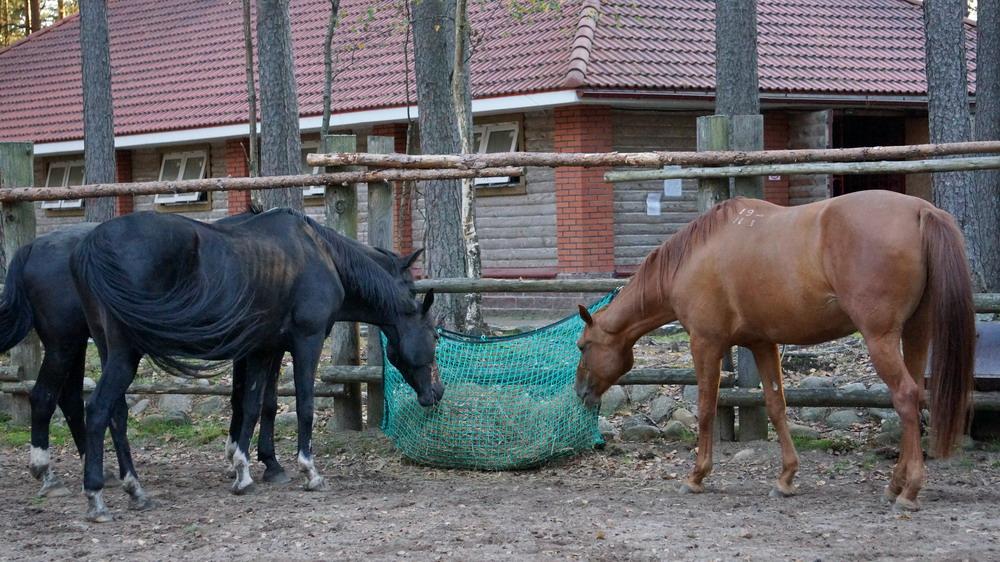 Медленные кормушки. Как обеспечить лошадь постоянным доступом к сену  - фото DSC00935, главная Содержание лошади , конный журнал EquiLIfe