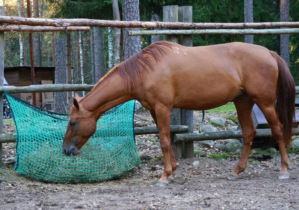 Медленные кормушки. Как обеспечить лошадь постоянным доступом к сену  - фото DSC01001, главная Содержание лошади , конный журнал EquiLIfe