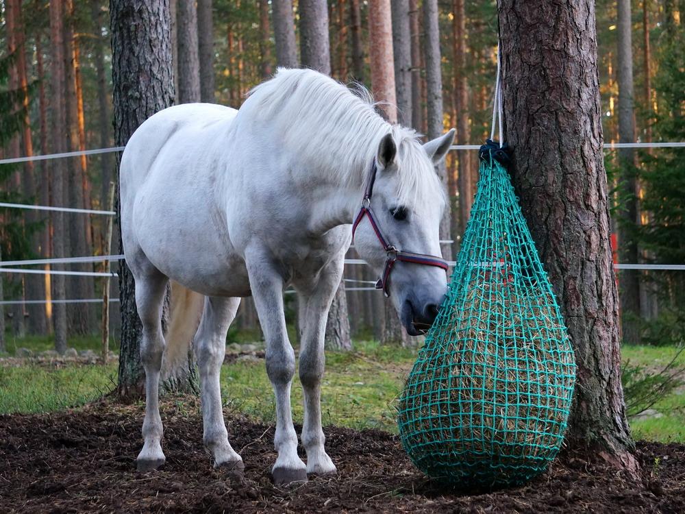 Медленные кормушки. Как обеспечить лошадь постоянным доступом к сену  - фото DSC01141, главная Содержание лошади , конный журнал EquiLIfe