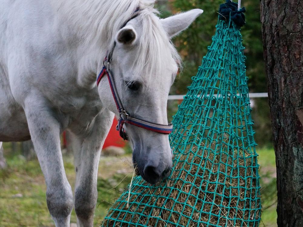 Медленные кормушки. Как обеспечить лошадь постоянным доступом к сену  - фото DSC01163, главная Содержание лошади , конный журнал EquiLIfe