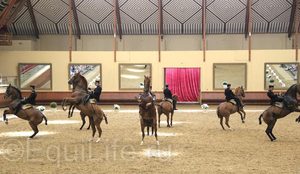 Французская национальная школа верховой езды Кадр Нуар: все о Школе ч.2 - фото IMG_0664_wm, главная Конные истории Содержание лошади , конный журнал EquiLIfe