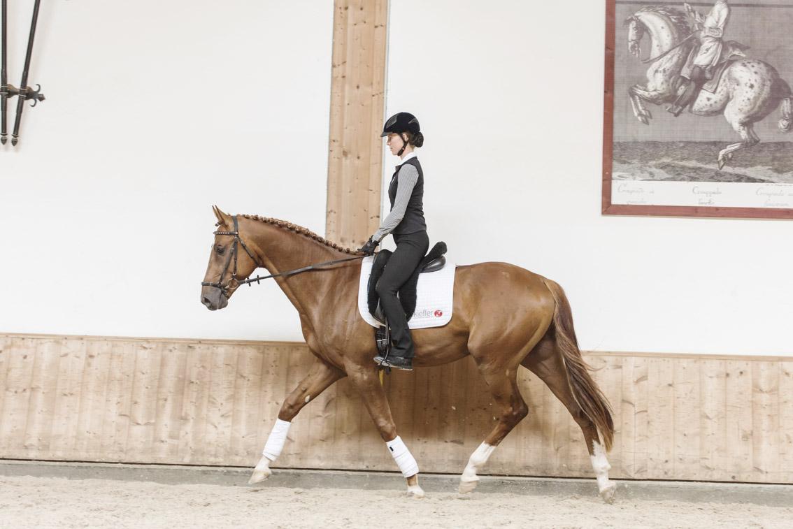 Workshop-2016 от Ани Беран. Два мнения. - фото MMD0073, Аня Беран главная События Тренинг , конный журнал EquiLIfe