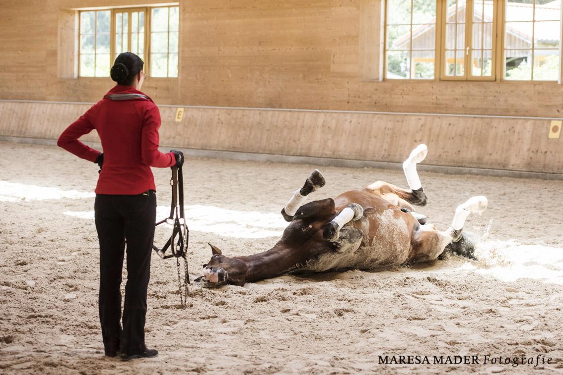 Workshop-2016 от Ани Беран. Два мнения. - фото MMD8276, Аня Беран главная События Тренинг , конный журнал EquiLIfe