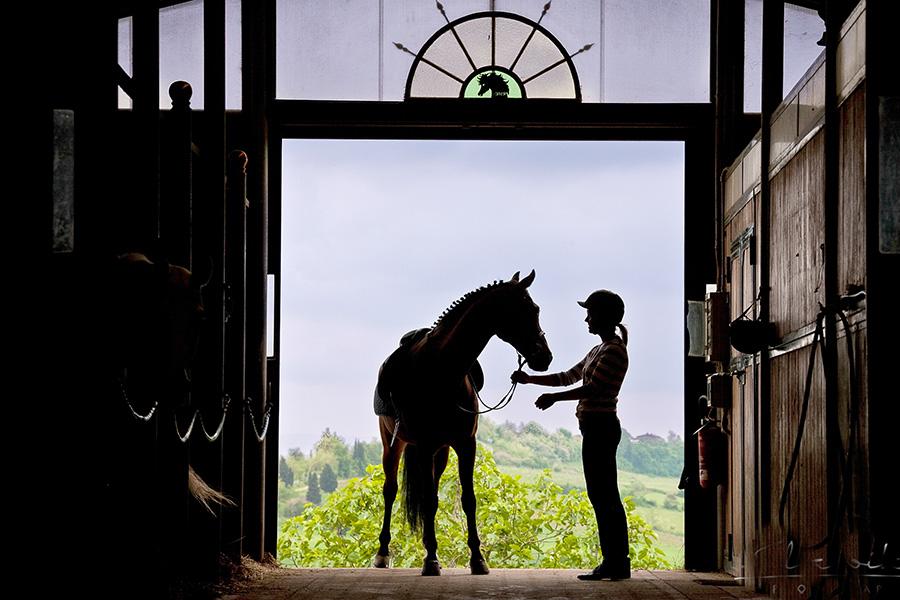 Приобретение лошади. Коротко о главном - фото equus-journeys_com, главная Содержание лошади Тренинг , конный журнал EquiLIfe