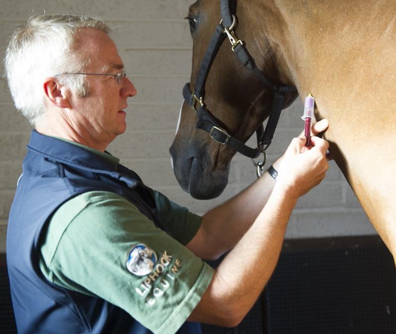 Приобретение лошади. Коротко о главном - фото liphookequinehospital_co_uk, главная Содержание лошади Тренинг , конный журнал EquiLIfe