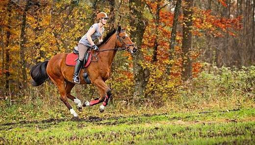Приобретение лошади. Коротко о главном - фото pinterest_com, главная Содержание лошади Тренинг , конный журнал EquiLIfe