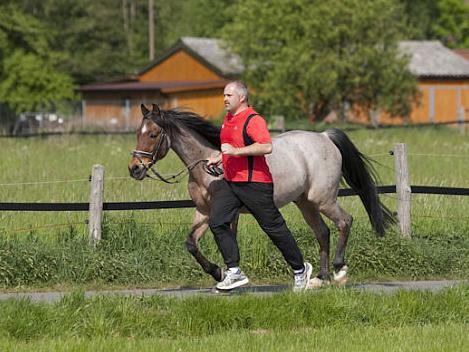 Верховая езда как фитнесс - фото taunusreiter_de, главная Разное , конный журнал EquiLIfe