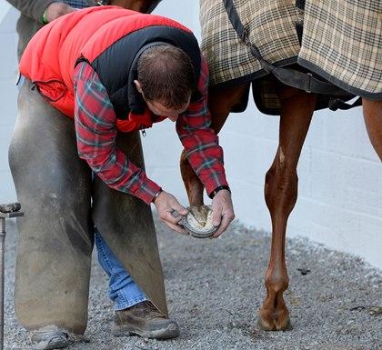 Приобретение лошади. Коротко о главном - фото thehorse_com, главная Содержание лошади Тренинг , конный журнал EquiLIfe