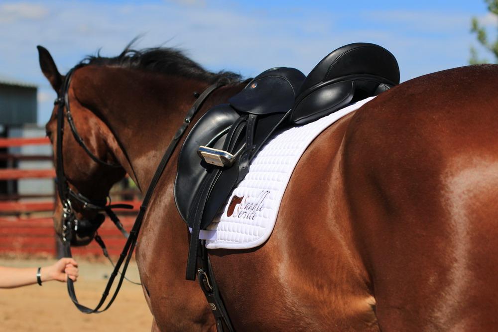 Подбор седла - фото C7sB50K4dA8, главная Содержание лошади Тренинг , конный журнал EquiLIfe