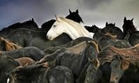 Horse Rescue 4