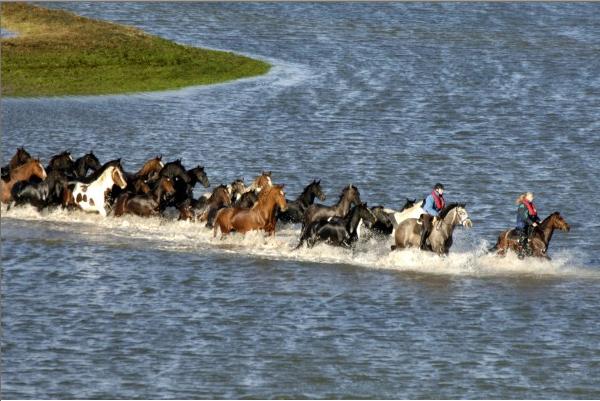 Как женщины спасли табун во время наводнения в Голландии. - фото Paardenreddingokt2006, главная Разное , конный журнал EquiLIfe