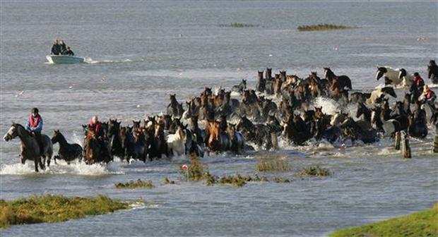 Как женщины спасли табун во время наводнения в Голландии. - фото image2150415, главная Разное , конный журнал EquiLIfe