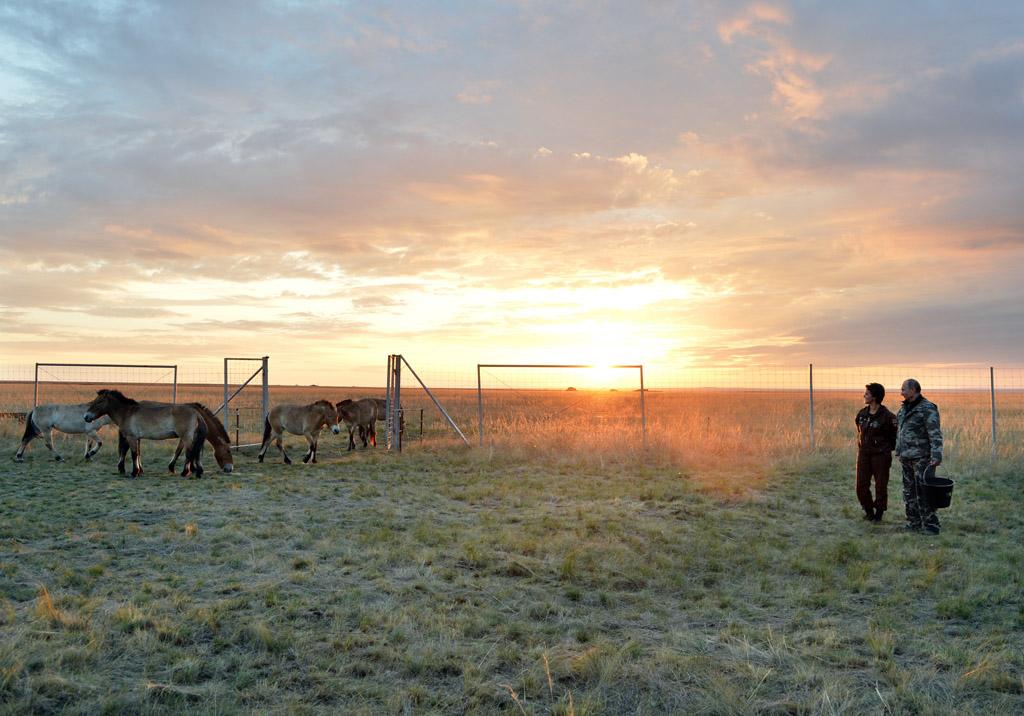 Владимир Путин выпустил на волю лошадей Пржевальского - фото image27323612_d0015746fb5ac71ed96acbd00ca98c38, Новости События , конный журнал EquiLIfe